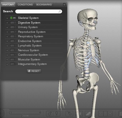 biodigitalhuman