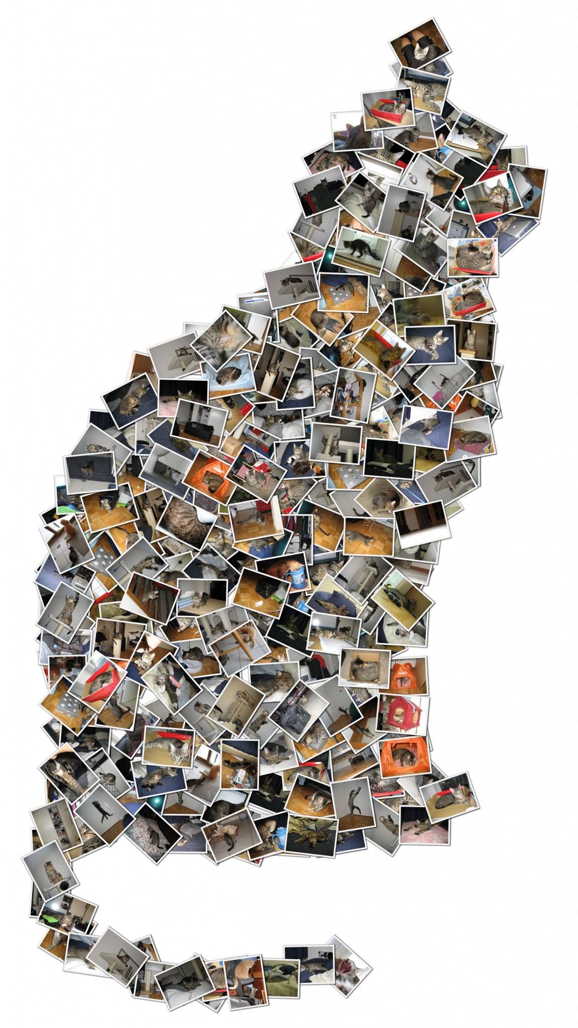 collage-cat
