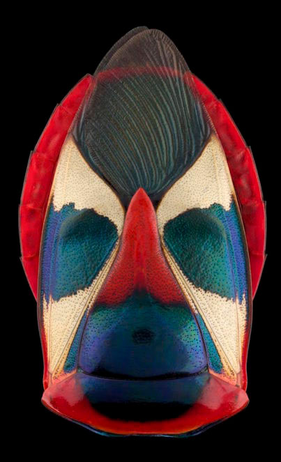 insectMask